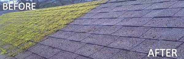 Godalming roof moss removal